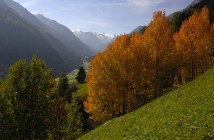 Herbst Highlights Stuba